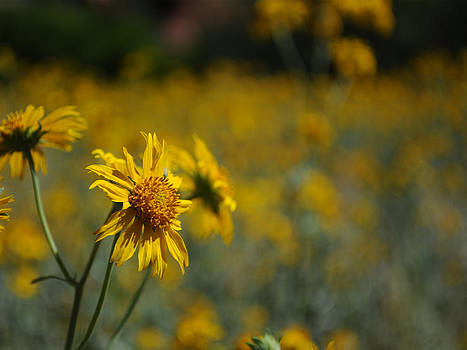 Earl Bowser - Beautiful Photography - Flowers 04