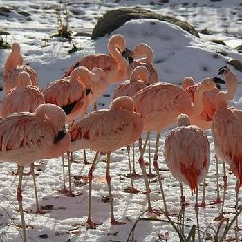 #beautiful #pink #animals #birds #love by Krista Hudson