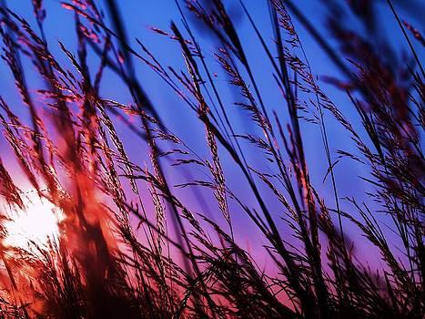 Beautiful Sunset by Alisha Luby
