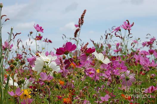 Beautiful Wildflowers by Tina Shamay