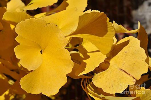 Beauty in the Leaves by Denise Ellis