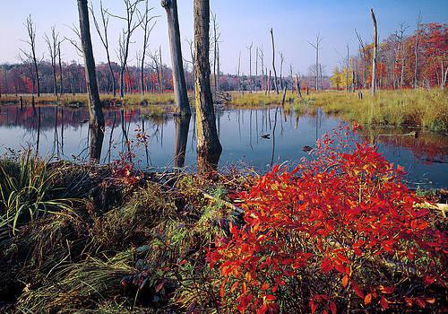 Beaver Dam Preserving Wetlands - New Jersey by Phil Degginger