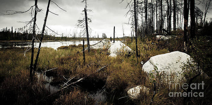 RicharD Murphy - Beaver Pond