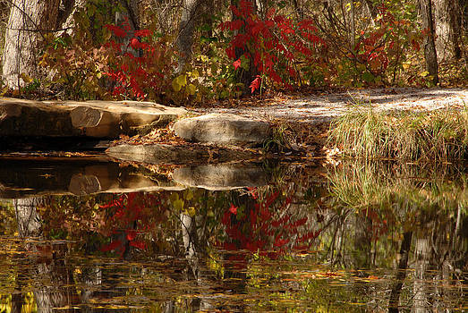 Beavers Pond by Cindy Rubin