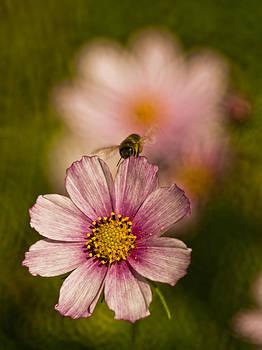 Bee by Adrian Krol
