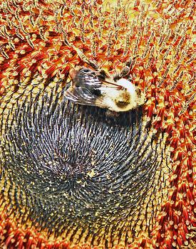 Jon Baldwin  Art - Bee and Sunflower