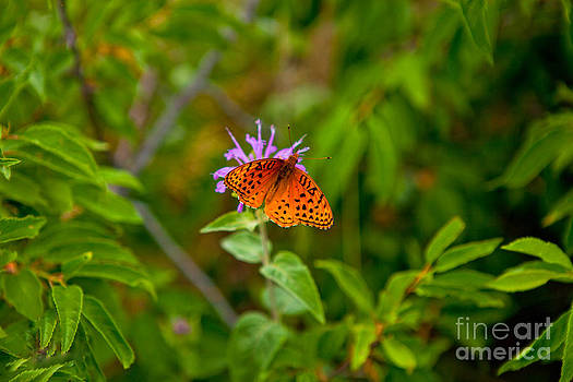 Bee Balm and Butterfly by Barbara Schultheis