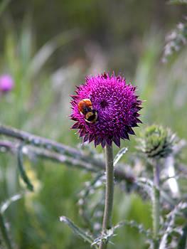 Stuart Turnbull - Bee careful
