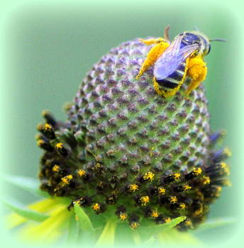 Bee Covered in Pollen by Maureen  McDonald