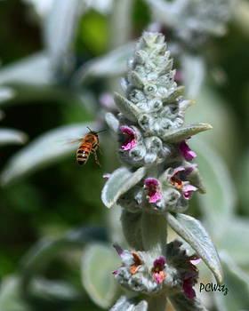 Patrick Witz - Bee Flight