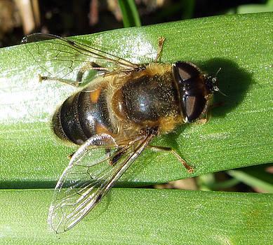 Baato   - bee green