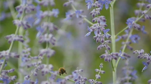 Bee Hind by Tony Hammer