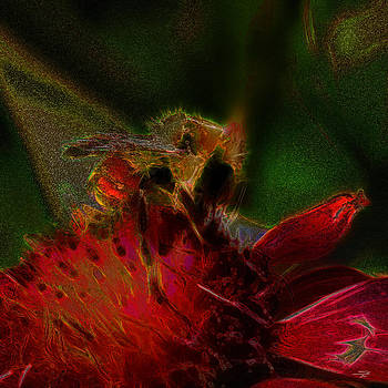 Stuart Turnbull - Bee jeweled