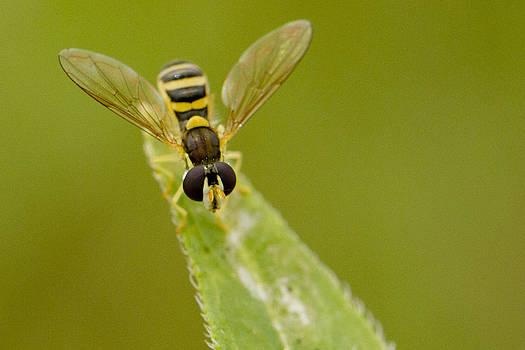Bee on Belief  by Dean Bennett
