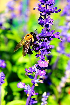 Bee on Purple Flowers by Cathy Leite Photography