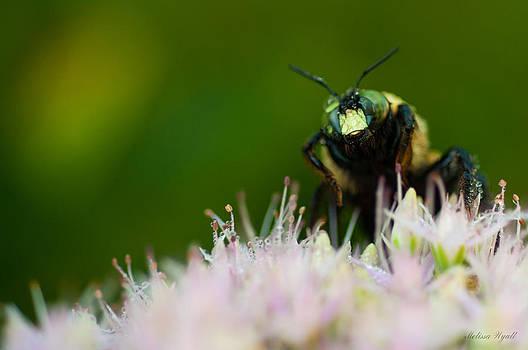 Bee Spectacular by Melissa Wyatt