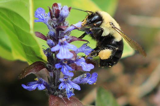 Bee this by LillyAnn Venturino