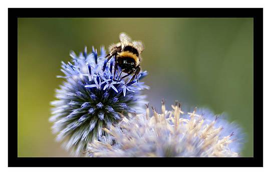 Bee Tree 2 by Sherry Fain