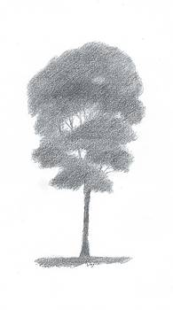 Beech Tree Drawing Number One by Alan Daysh