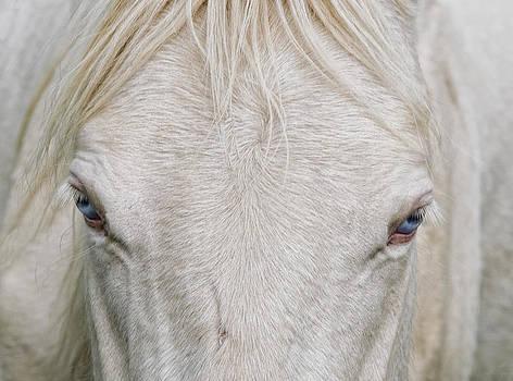 Behind Blue Eyes by Heather  Rivet