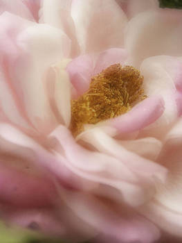 Diana Cox - Being Pink Softly