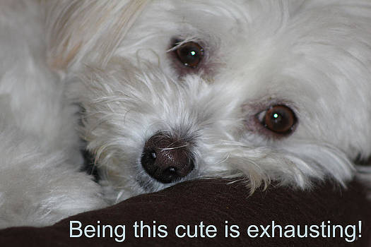 Being this cute is exhausting by LillyAnn Venturino