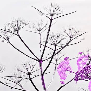 Sicilia Spring by Silva Wischeropp
