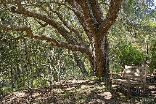 Mick Anderson - Bench and Tree in Cambria II