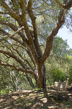 Mick Anderson - Bench and Tree in Cambria