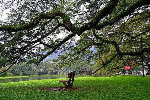 Bench Under The Shade by Ku Azhar Ku Saud