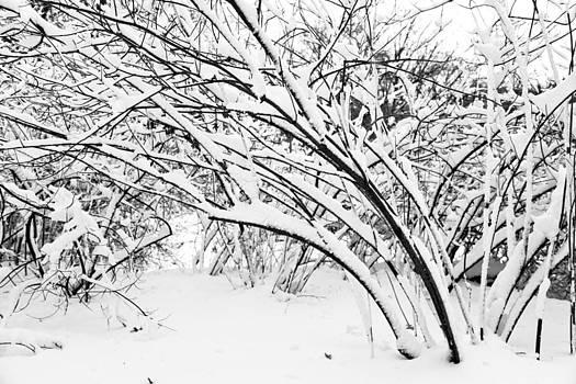 Nicole Neuefeind - Bending bush