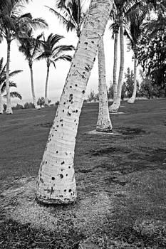 James Steele - Bent Palm