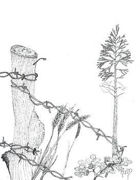 Beyond The Broken Fence - Sketch by Robert Meszaros