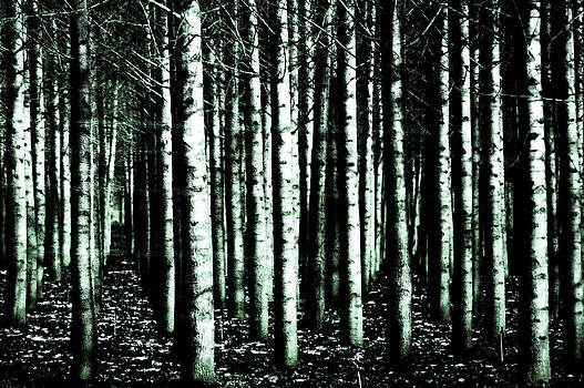 Beyond The Trees by Terrie Taylor