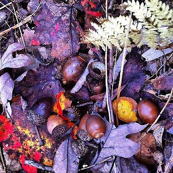 Big Acorn Crop This Year In by Dave M