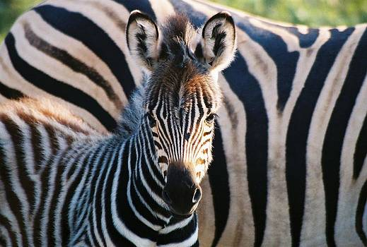 Big and Little Stripes by Barbara Allm