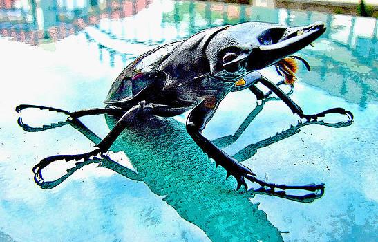 Roy Foos - Big Bad Beetle
