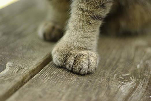 Marilyn Wilson - Big Beautiful Paws