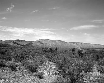 Big Bend Vista by David Chalker