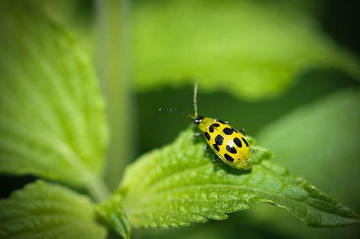 Big World Little Bug by Sabrina Gamig