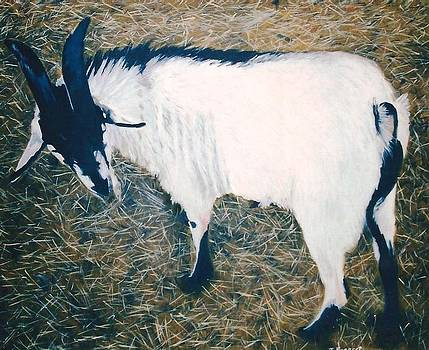 Billy Goat by Terry Forrest