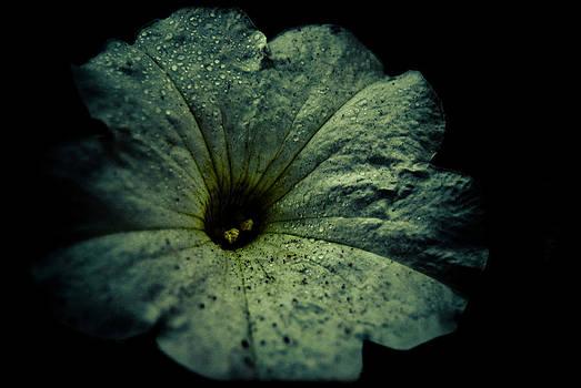 Bindweed by Grebo Gray