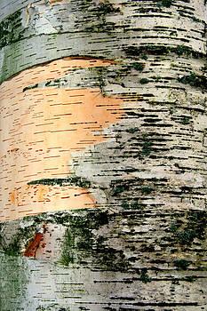 Kathy Peltomaa Lewis - Birch Bark