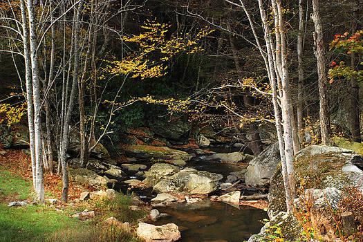 Birch Frame by Cecile Brion