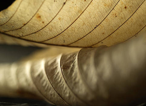Birch Leaves by Mark Wagoner