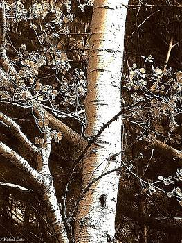 Birch Tree by Katina Cote