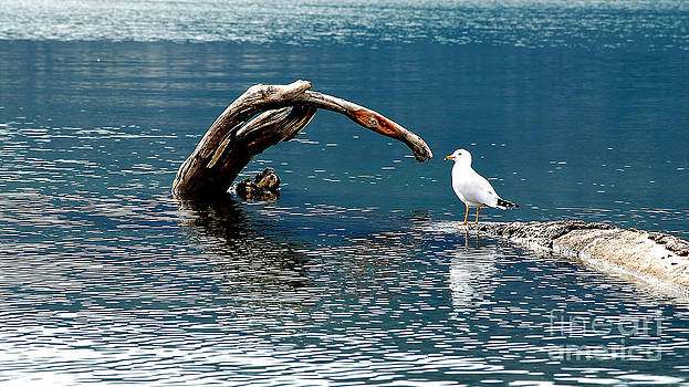 Bird And Log by Barry Shaffer