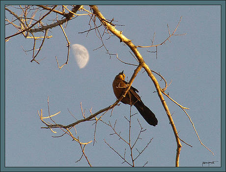 Bird and Moon by Lawrence P Kaster