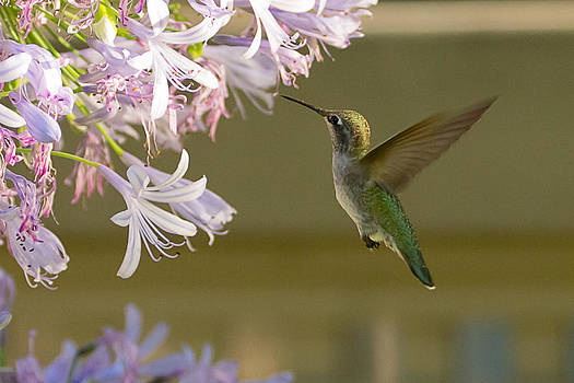 Bird Blossoms by Srinivas Kolli
