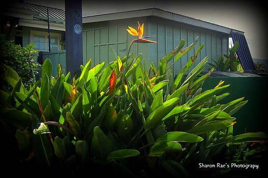 Bird Flower by Sharon Farris